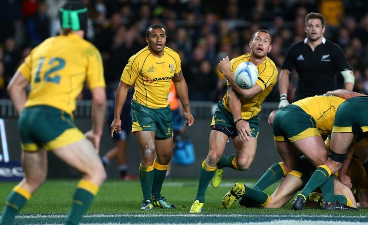 Wallabies at home