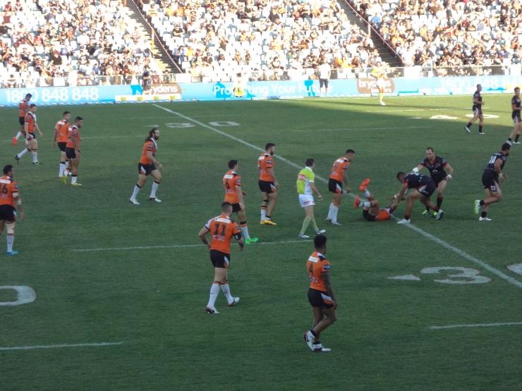 Tigers26.JPG